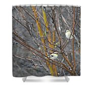 Two American Goldfinch Shower Curtain
