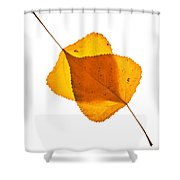 Two Backlit Cottonwood Leaves In Autumn On White Shower Curtain