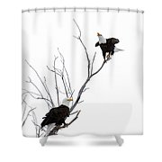 Two Bald Eagles Shower Curtain