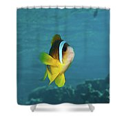 Two-banded Clownfish Shower Curtain