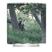 Two Bear Cubs Shower Curtain