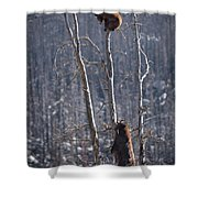 Two Bears Up A Tree Shower Curtain