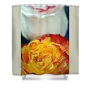 Two Beautiful Roses Shower Curtain