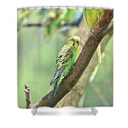 Two Beautiful Yellow Parakeets In A Tree Shower Curtain