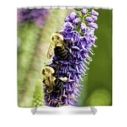Salvia With Bees Shower Curtain