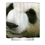 Two Black Eyes Shower Curtain