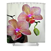 Two Blooms For You Shower Curtain