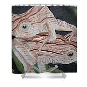 Two Brown Striped Frogs Shower Curtain