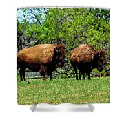 Two Buffalo Shower Curtain