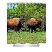 Two Buffalo Standing Shower Curtain