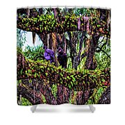 Two Buzzards In A Tree Shower Curtain