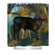 Two Calfs Shower Curtain