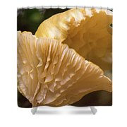 Two Cantharellus Shower Curtain