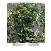 Two Cardinals On The Vine Tree Shower Curtain