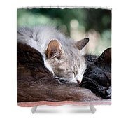 Two Cats  Sleeping  Shower Curtain