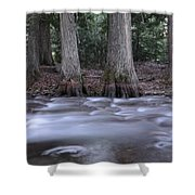 Two Ceders Next To A Mountain Stream Shower Curtain