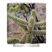 Two Cholla Friends Shower Curtain