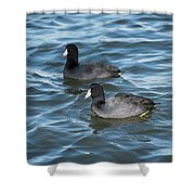 Two Coots Shower Curtain