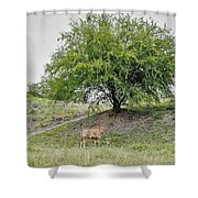 Two Cows And A Tree Shower Curtain