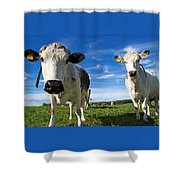Two Cows Shower Curtain