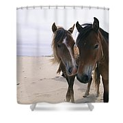 Two Curious Wild Horses On The Beach Shower Curtain