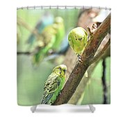 Two Cute Little Parakeets In A Tree Shower Curtain