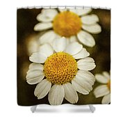 Two Daisies Shower Curtain