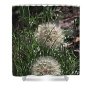 Two Dandelions, Shower Curtain