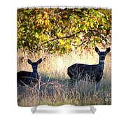 Two Deer In Autumn Meadow Shower Curtain