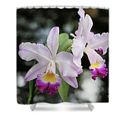 Two Delicate Orchids Shower Curtain