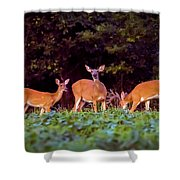 Two Doe And One Buck Shower Curtain