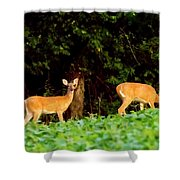 Two Doe Shower Curtain