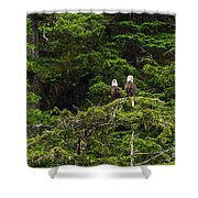 Two Eagles Perched Painterly Shower Curtain