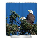Two Eagles Shower Curtain