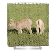 Two Ewes In The Badlands Shower Curtain