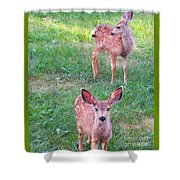 Two Fawn Shower Curtain