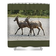 Two Female Longhorn Sheep Shower Curtain