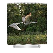 Two Florida Sandhill Cranes In Flight Shower Curtain