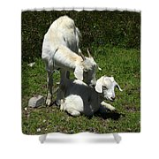 Two Goats In A Pasture Shower Curtain