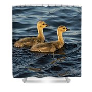 Two Goslings Shower Curtain