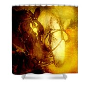 Two Horsepower Shower Curtain