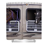 Two Horses Are Ready To Travel Shower Curtain
