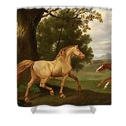 Two Horses In A Landscape Shower Curtain