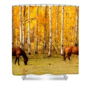 Two Horses In The Colorado Fall Foliage Shower Curtain