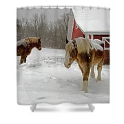 Two Horses In Winter Shower Curtain