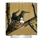 Two Hummingbird Babies In A Nest 5 Shower Curtain