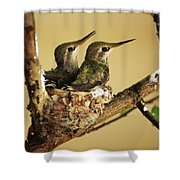 Two Hummingbird Babies In A Nest Shower Curtain