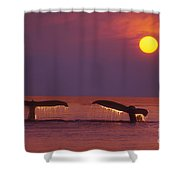 Two Humpback Whales Shower Curtain