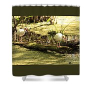 Two Ibises On A Log Shower Curtain