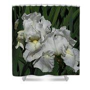 Two Irises Shower Curtain